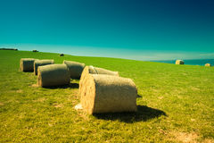 Hay bales in New Zealand. Colorful landscape with hay bales in New Zealand Stock Photography