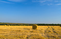 Hay bales in a newly mowed and raked field Stock Photos