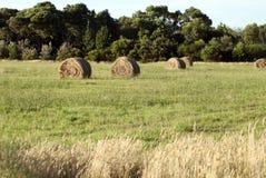 Hay Bales op een Gebied Royalty-vrije Stock Afbeelding