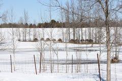 Hay Bales op Sneeuw Behandeld Gebied royalty-vrije stock afbeelding