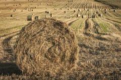 Hay Bales på Towie i Aberdeenshire, Skottland Royaltyfri Foto