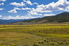 Hay Bales in a Pasture. Hay bales dot a high pasture in Colorado Stock Images