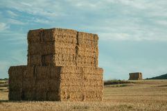 Hay bales piled up on field in a farm. Rural landscape with hay bales piled up on a field covered by straw at sunset, in a farm near Elvas. A gracious star stock photos