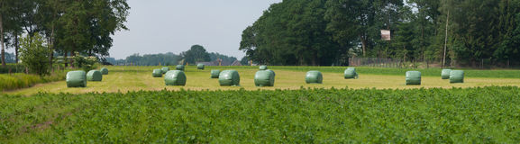 Hay bales in plastic Royalty Free Stock Photos