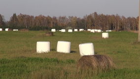 Hay bales in plastic on farm field Stock Photos