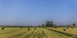 Hay bales in plastic in a harvested grass field Royalty Free Stock Image