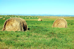 Hay bales in the prairies. Hay bales in the Canadian prairies with Rocky mountains in the background.  Alberta.  Canada Royalty Free Stock Photo