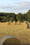 Hay bales ready for winter Stock Images