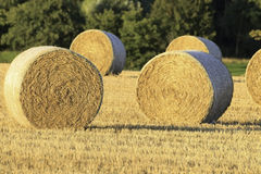 Hay bales ready for winter Royalty Free Stock Images