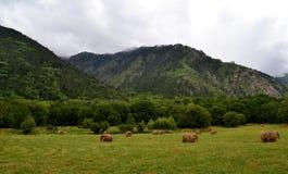 Hay bales. Reserve Teberda, Karachay-Cherkessia Republic, Russia. Photo taken on: July 28 Sunday, 2013 Royalty Free Stock Photography