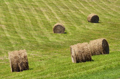 Hay bales rolled in a hay field. Royalty Free Stock Image