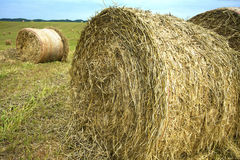 Hay bales rolled in a hay field. Stock Photography