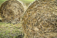 Hay bales rolled in a hay field. Royalty Free Stock Photos