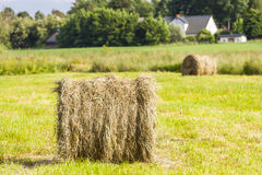 Hay bales rolled up. Royalty Free Stock Photography