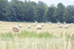 Hay Bales (Round) in Field Stock Image