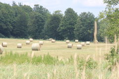 Hay Bales (Round) in Field Stock Photo