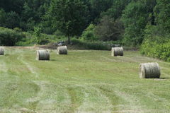 Hay Bales (Round) in Field Royalty Free Stock Photos