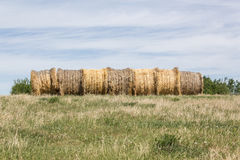 Hay bales. Round hay bales lined up Royalty Free Stock Photography