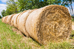 Hay bales in row. Stock Image