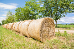 Hay bales in row. Stock Photography