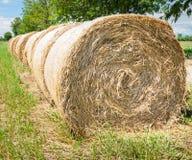 Hay bales in row. Stock Photo