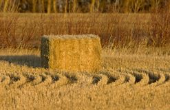 Hay Bales and rows stock image