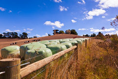 Hay bales, Australia. Hay bales in rural Australian landscape on the outskirts of Leongatha, Victoria Stock Photography
