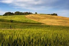 Hay bales on rural landscape Stock Images