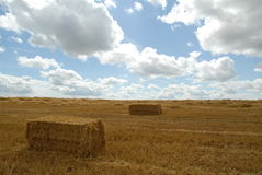 Hay bales in rural landscape Royalty Free Stock Photo