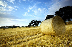 Hay bales in rural landscape royalty free stock photos