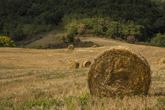 Hay bales. Series in open country Stock Photo