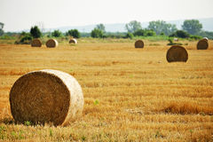 Hay bales Stock Images