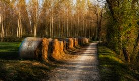 Hay bales on the Sile riverside north Italy at sunset. Trees on the background royalty free stock photography