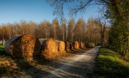 Hay bales on the Sile riverside north Italy at sunset. stock photography