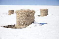Hay bales in the snow Stock Photography