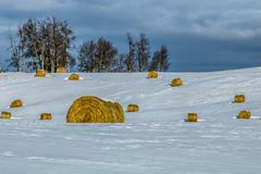 Hay bales in a snowy field, cowboy Trail, Alberta, Canada. Hay bales poking up out of a snow covered field Stock Image