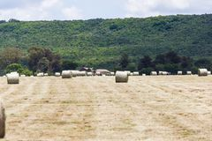 Hay bales sorted on a field. Hay bales lie in wait on a farm field in KZN, South Africa royalty free stock photography