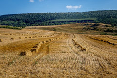 Hay bales spread on agricultural fields Stock Images