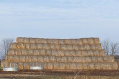 Hay Bales stacked. In a field near a farm Royalty Free Stock Photo
