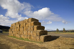 Hay bales stacked up Stock Photo