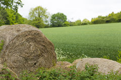 Hay bales stored in a field of long grass Royalty Free Stock Image