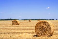 Hay bales on a stubble field. Stubble field with rolls of gathered straw or hay and a bright blue sky royalty free stock images