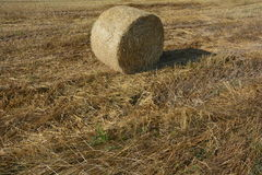 Hay  bales on the stubble field in detail Stock Image