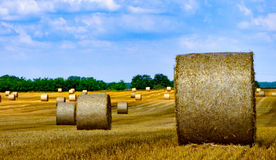 Hay bales on a stubble field. Stubble field with rolls of gathered straw with blue sky Royalty Free Stock Photo