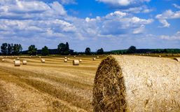 Hay bales on a stubble field. Stubble field with rolls of gathered straw with blue sky Stock Photography
