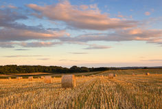 Hay Bales in summer, Dorset, UK Royalty Free Stock Image