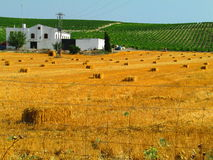 Hay Bales in Summer Evening Light, Jerez Stock Images