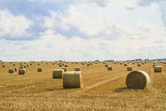 Hay bales. Summer field work in the plain Royalty Free Stock Photo