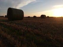 Field sunset stock photos