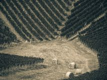 Hay bales in the vineyards. Four hay bales in the vineyards stock photo